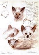 Sam's Kittens