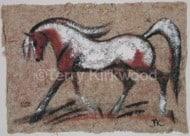 Coloured Pony